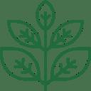 Herbal Plant Based